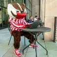 Bucky Badger wearing a face mask and using a laptop